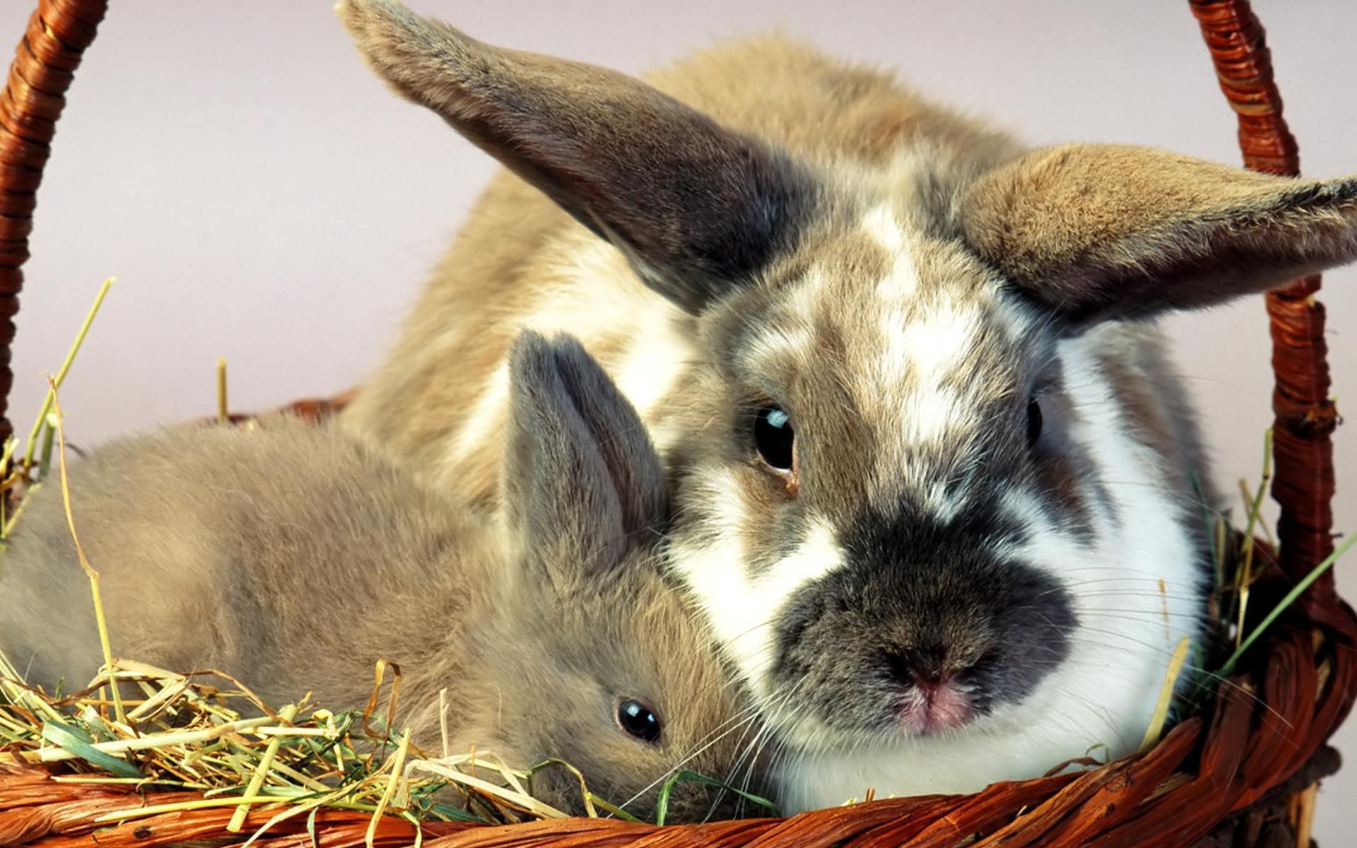 кирпичный профессиональные фото кроликов мам