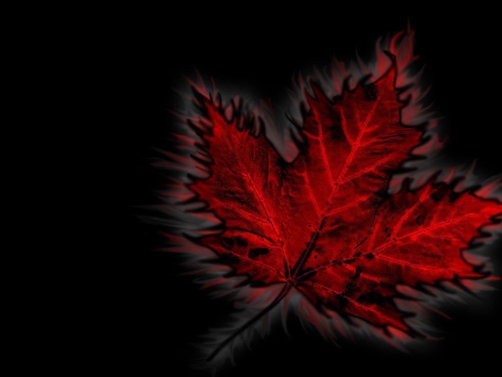 Canada Flag Leaf Wallpaper