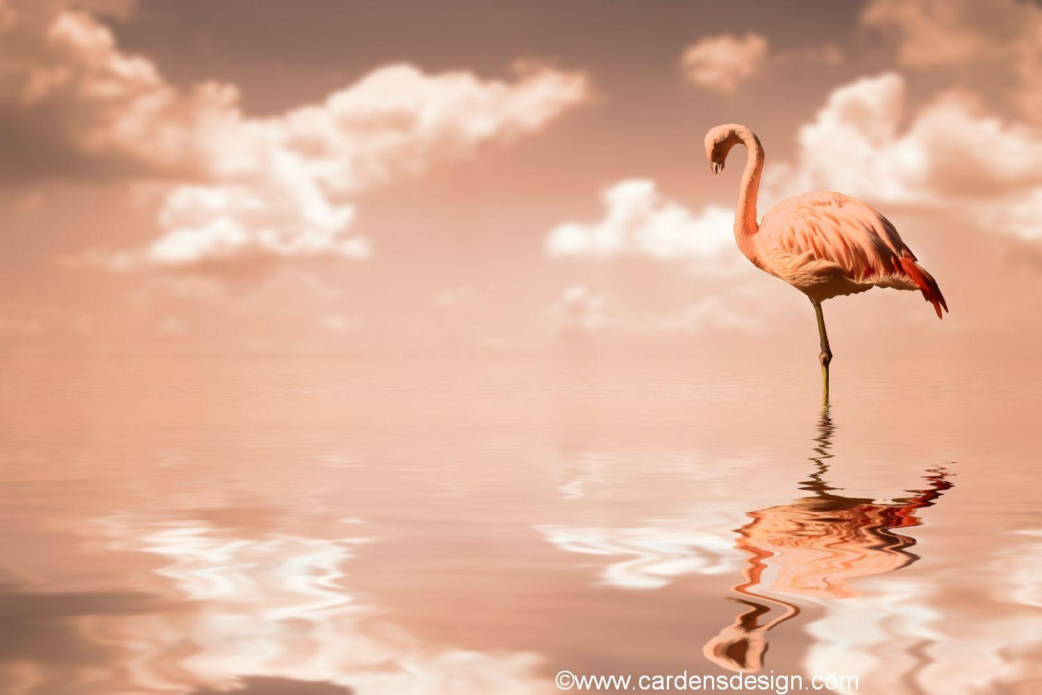 Flamingo Wallpapers 10107 Wallpapers HD