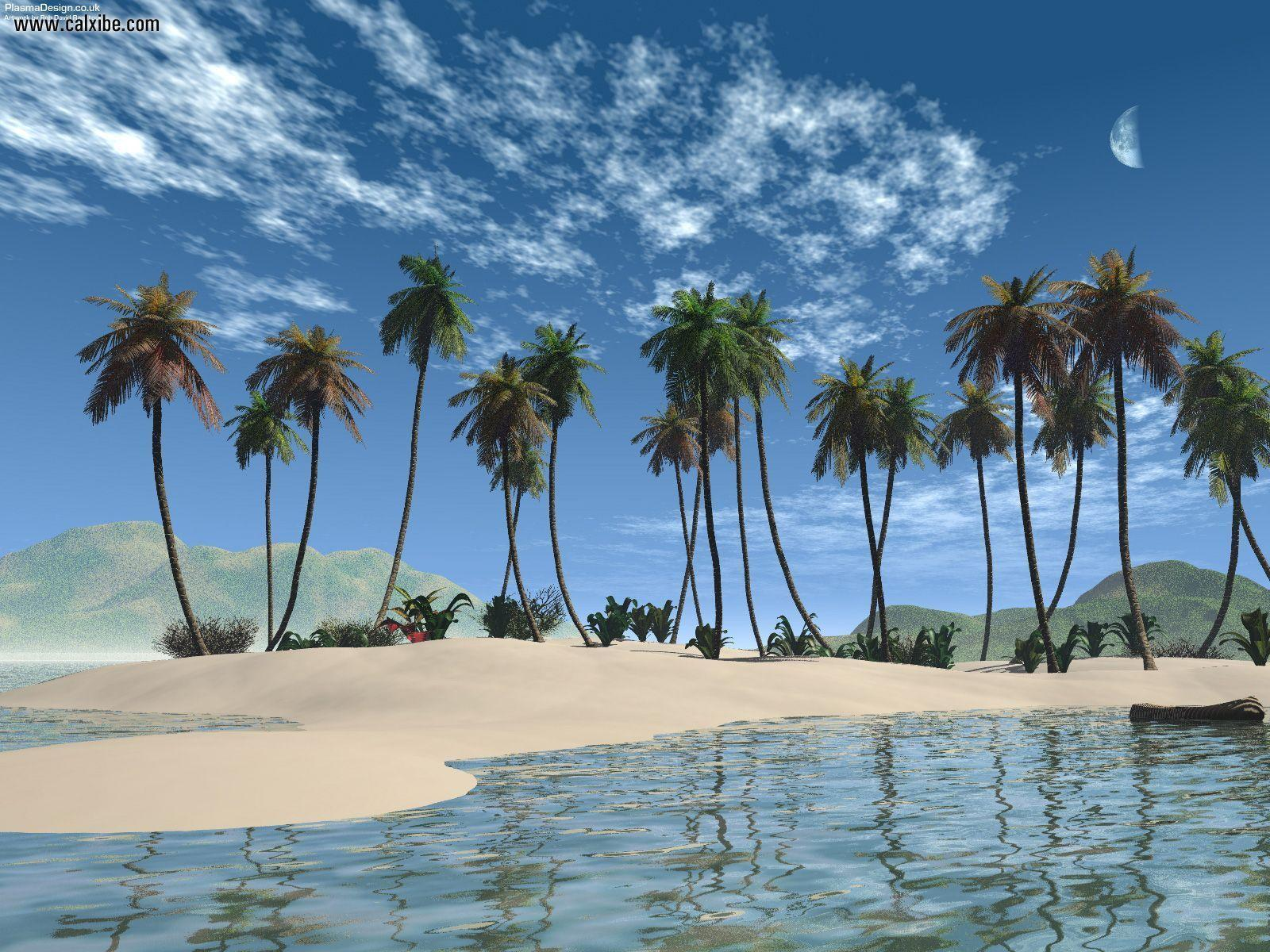 Palm Trees On The Beach: Palm Tree Beach Wallpapers