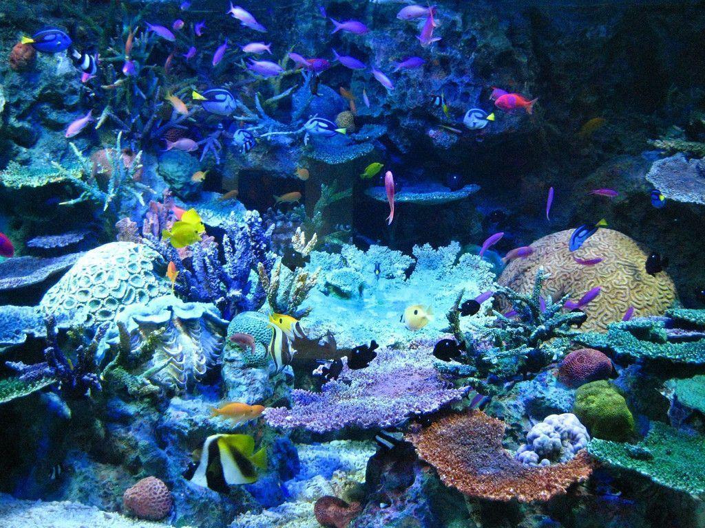 Tropical Aquarium Wallpaper