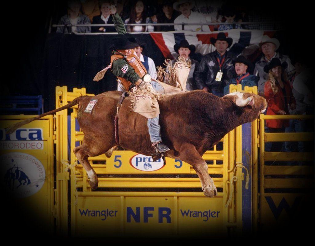 Image Result For Bull Riding Wallpapers Awesome Bull Riding Wallpapers Wallpaper Cave