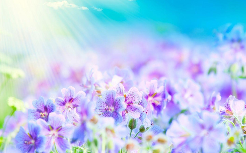 Top Flowers Wallpapers - HD Wallpapers Inn
