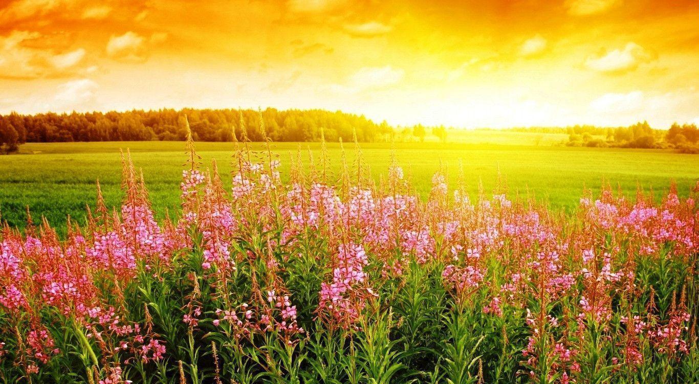 Sunrise Flower Wallpaper Photos HD 512891 #5090 Wallpaper | Cool ...