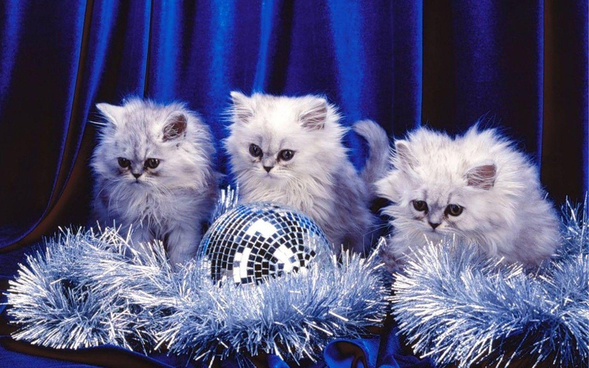 Free kittens wallpapers wallpaper cave - Free wallpaper of kittens ...