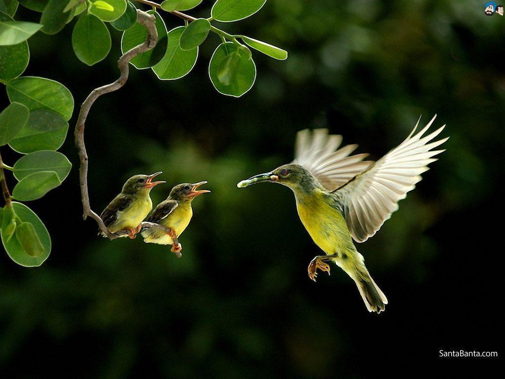 Birds Wallpapers Wallpaper Cave