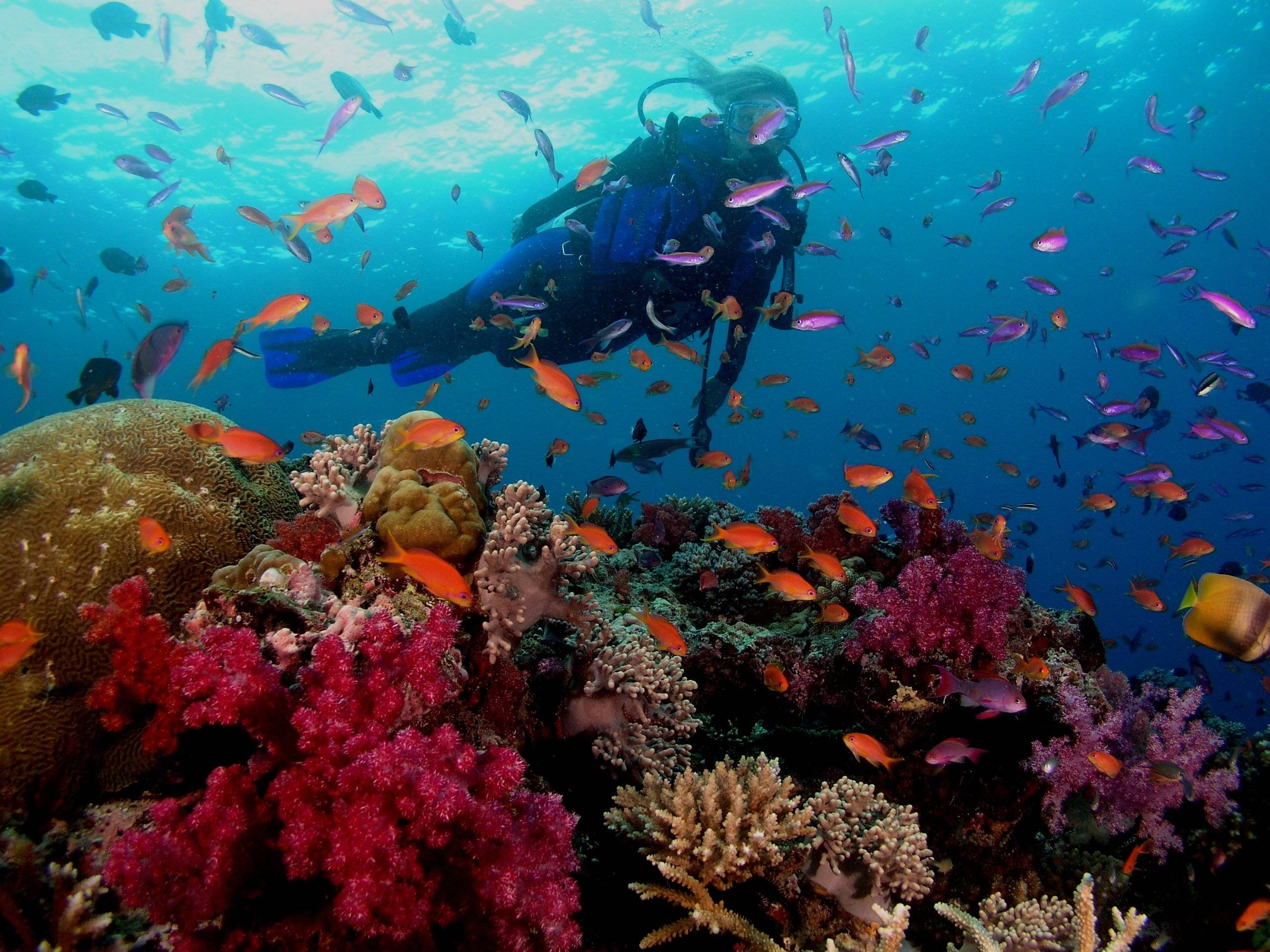 Free scuba diving wallpapers wallpaper cave - Best place to dive the great barrier reef ...
