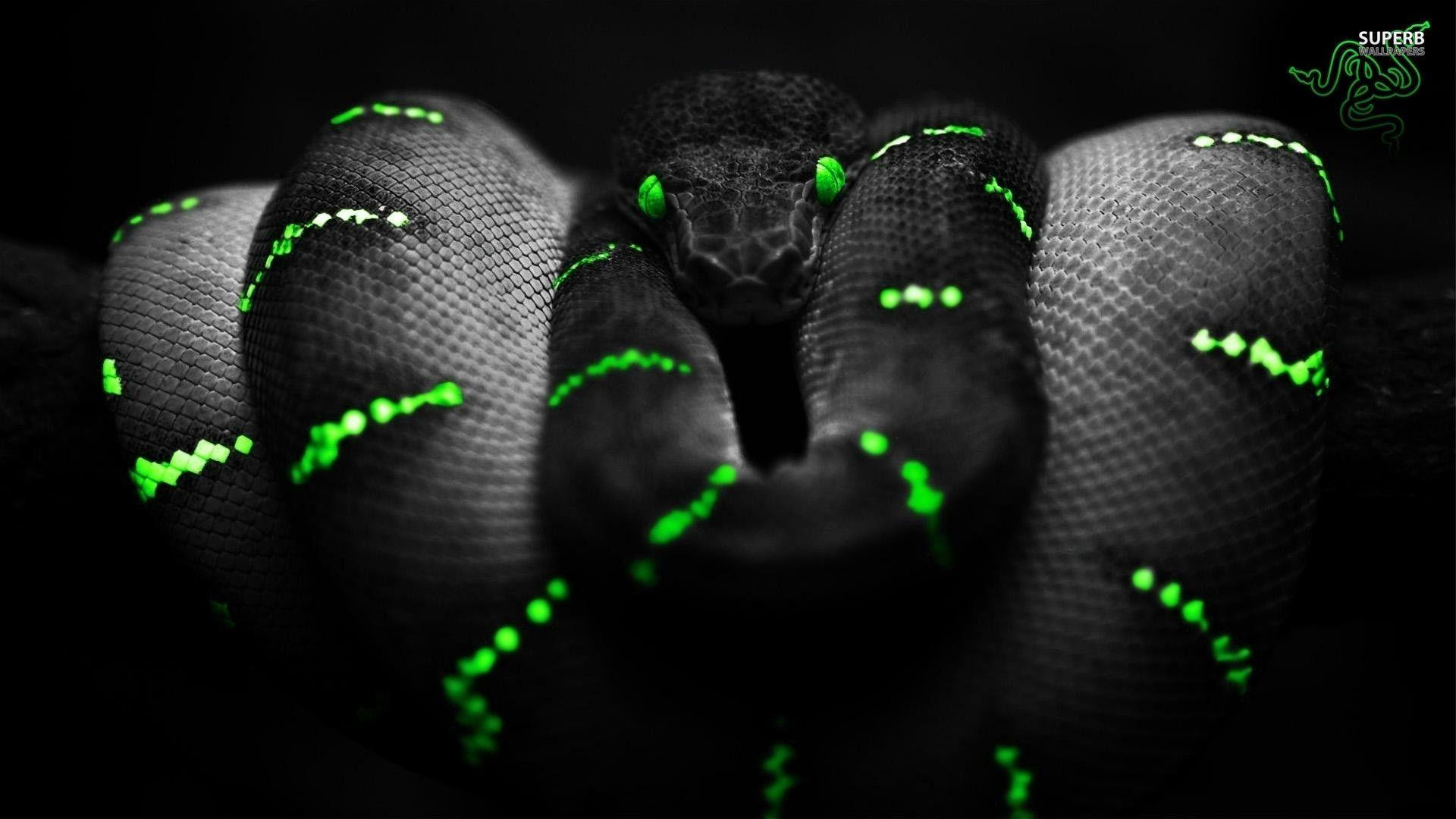 Razer Wallpapers 1920x1080 Wallpaper Cave