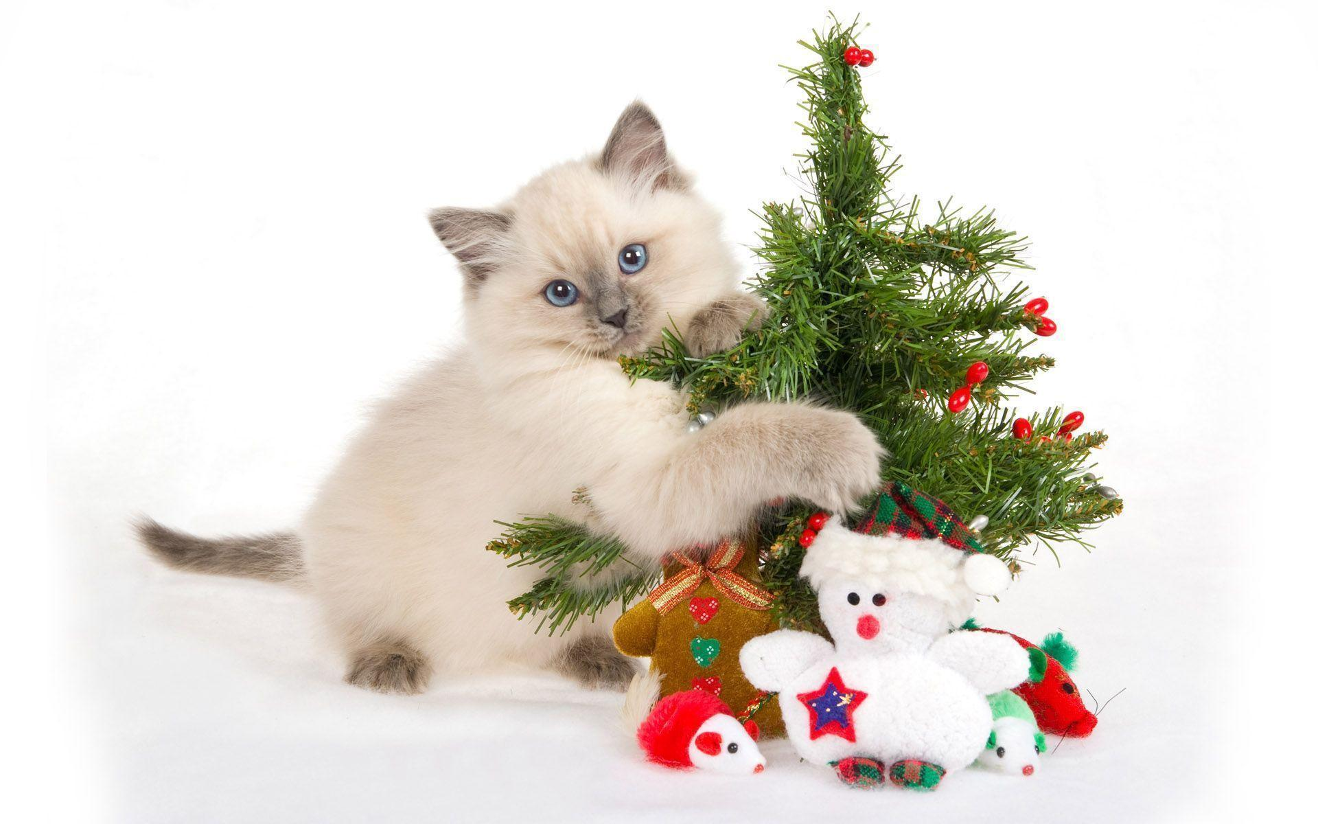 Christmas Kitten Wallpaper Wallpaper | 7ual