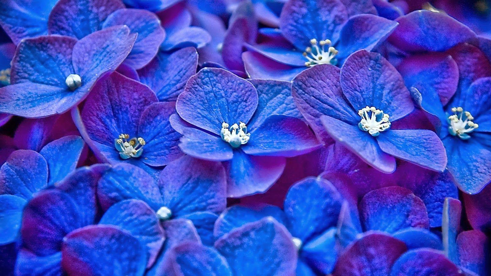Blue Flowers Wallpapers - Wallpaper Cave