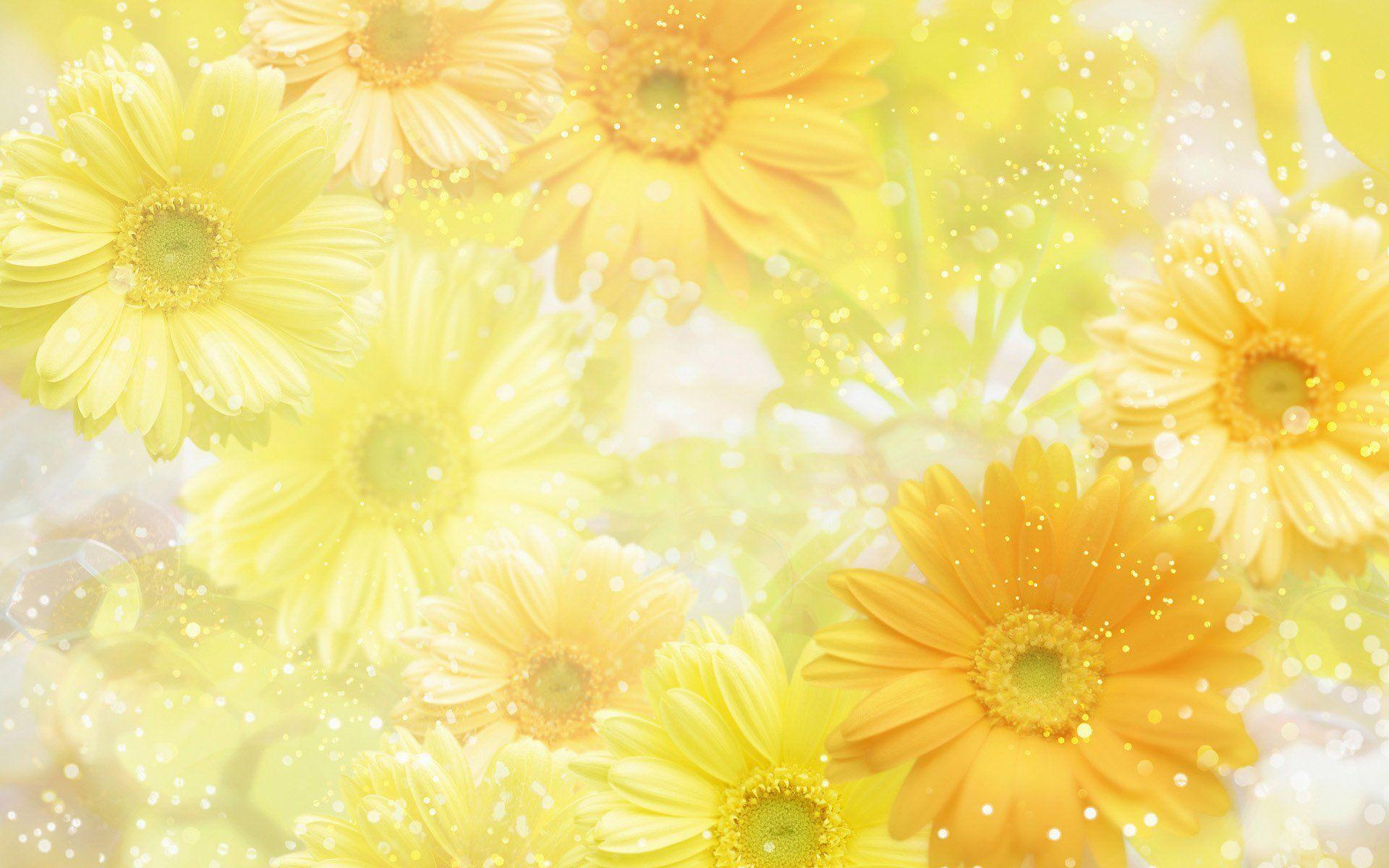 Download These 42 Yellow Wallpapers in High Definition For Free
