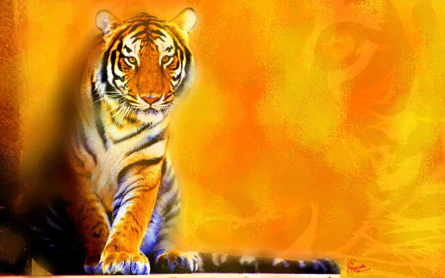tiger backgrounds pictures wallpaper cave