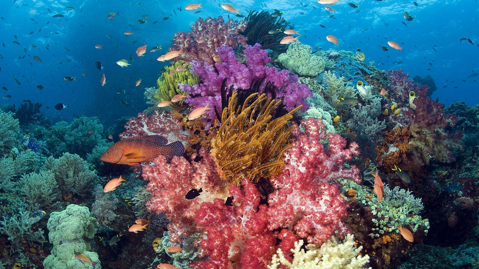 HD Coral Reef Life Wallpaper | Download Free - 61596