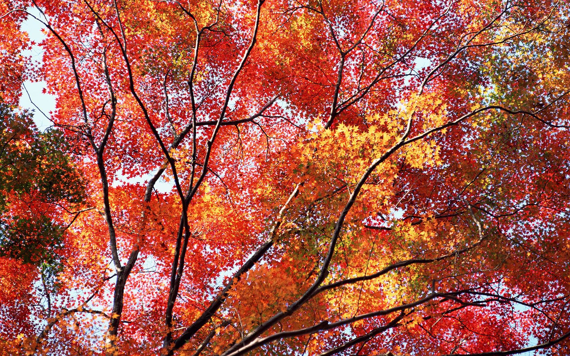 Autumn Wallpapers Free