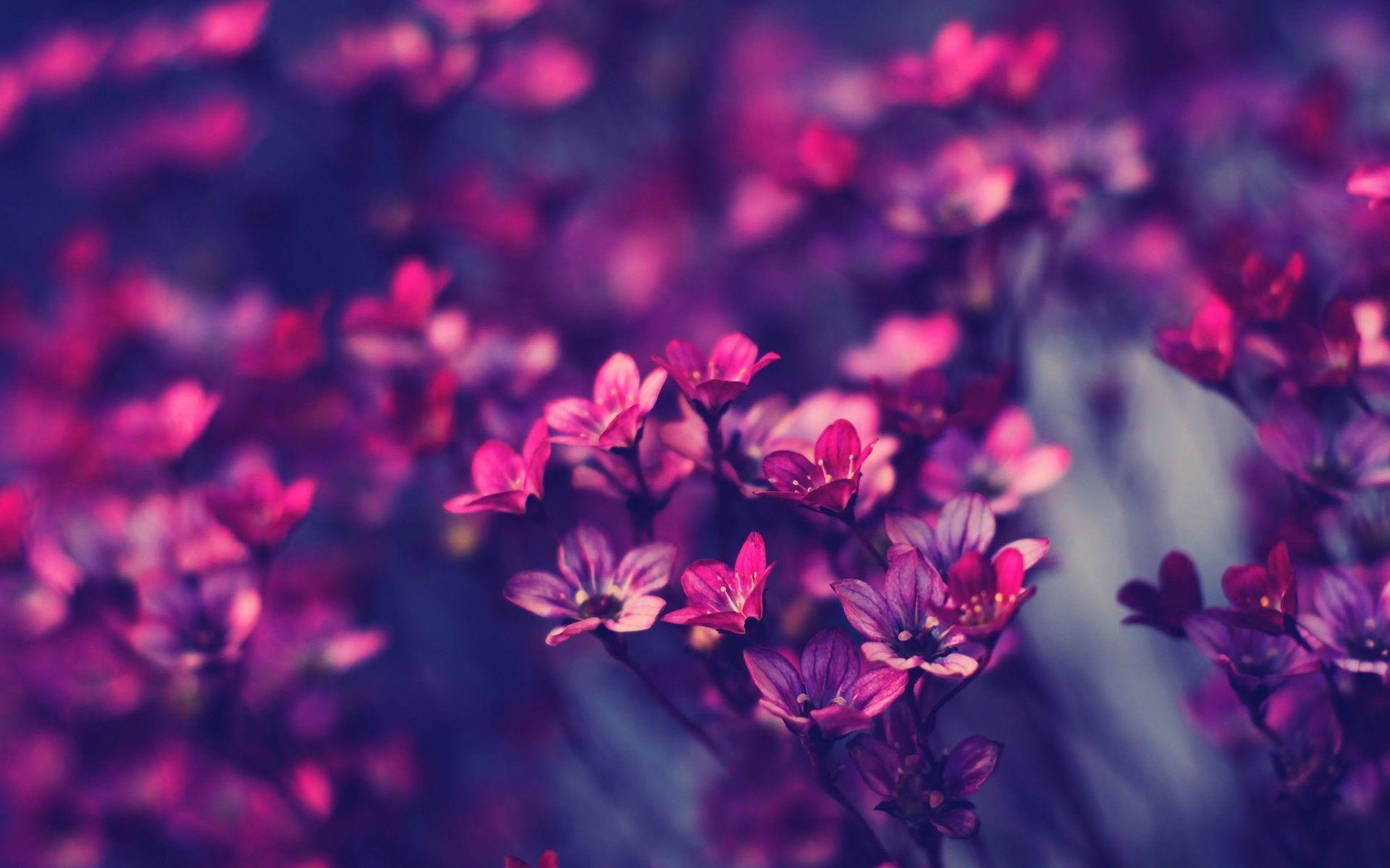 Little Purple Flowers Wallpapers 9225 Full HD Wallpaper Desktop