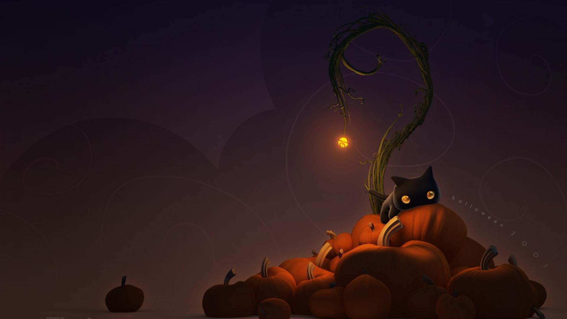 Bildresultat för halloween cat