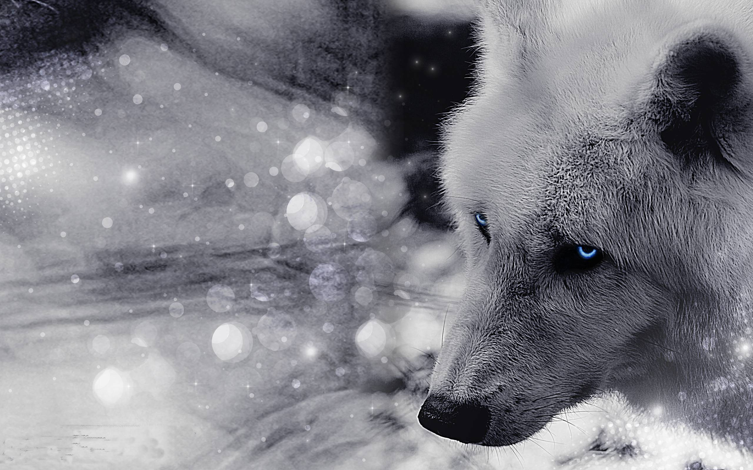 Animals For Black Timber Wolf Wallpaper