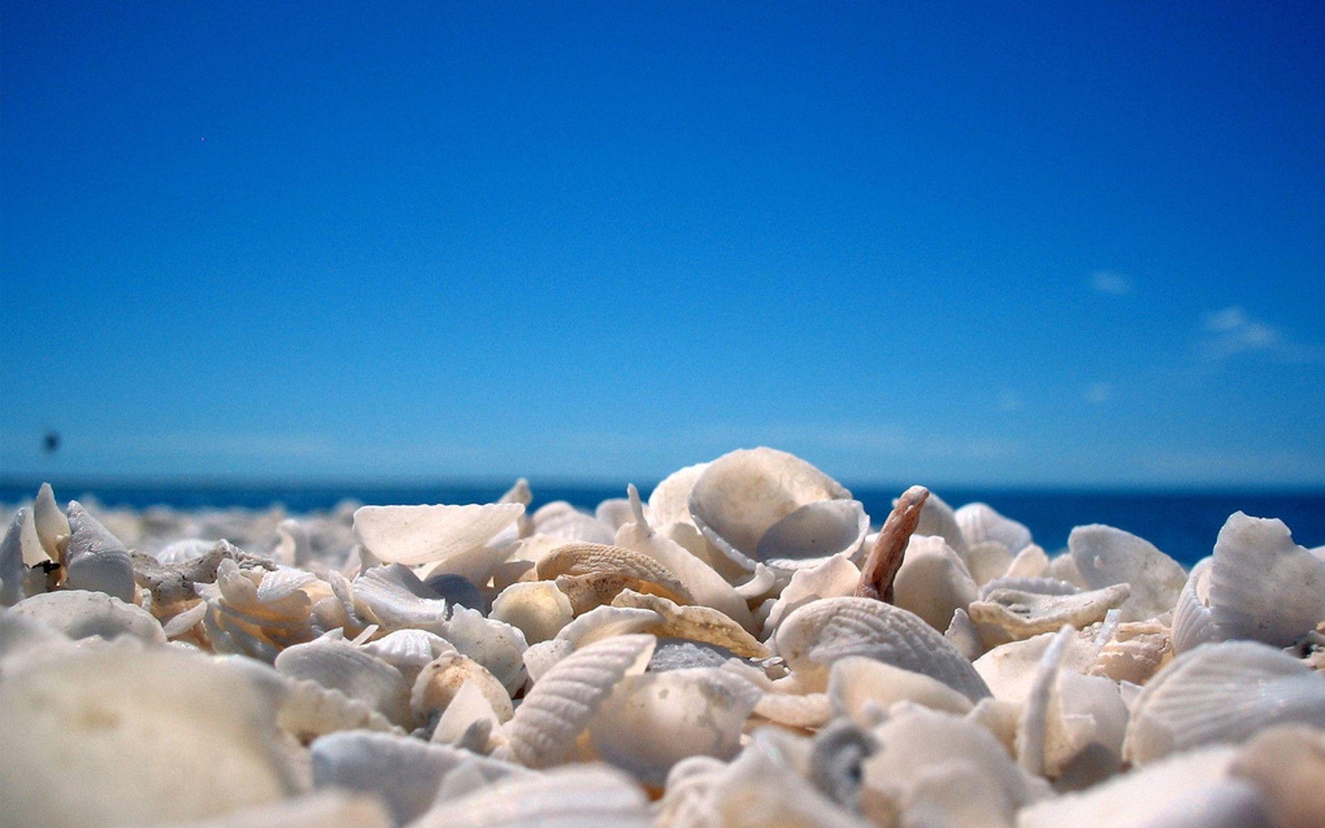 Seashells wallpaper 24 - Seashell Wallpapers Full Hd Wallpaper Search
