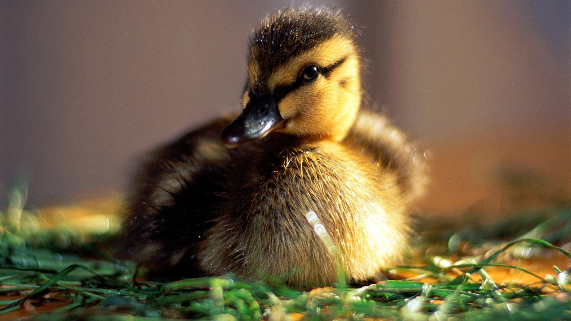 Baby Animal Backgrounds - Wallpaper Cave
