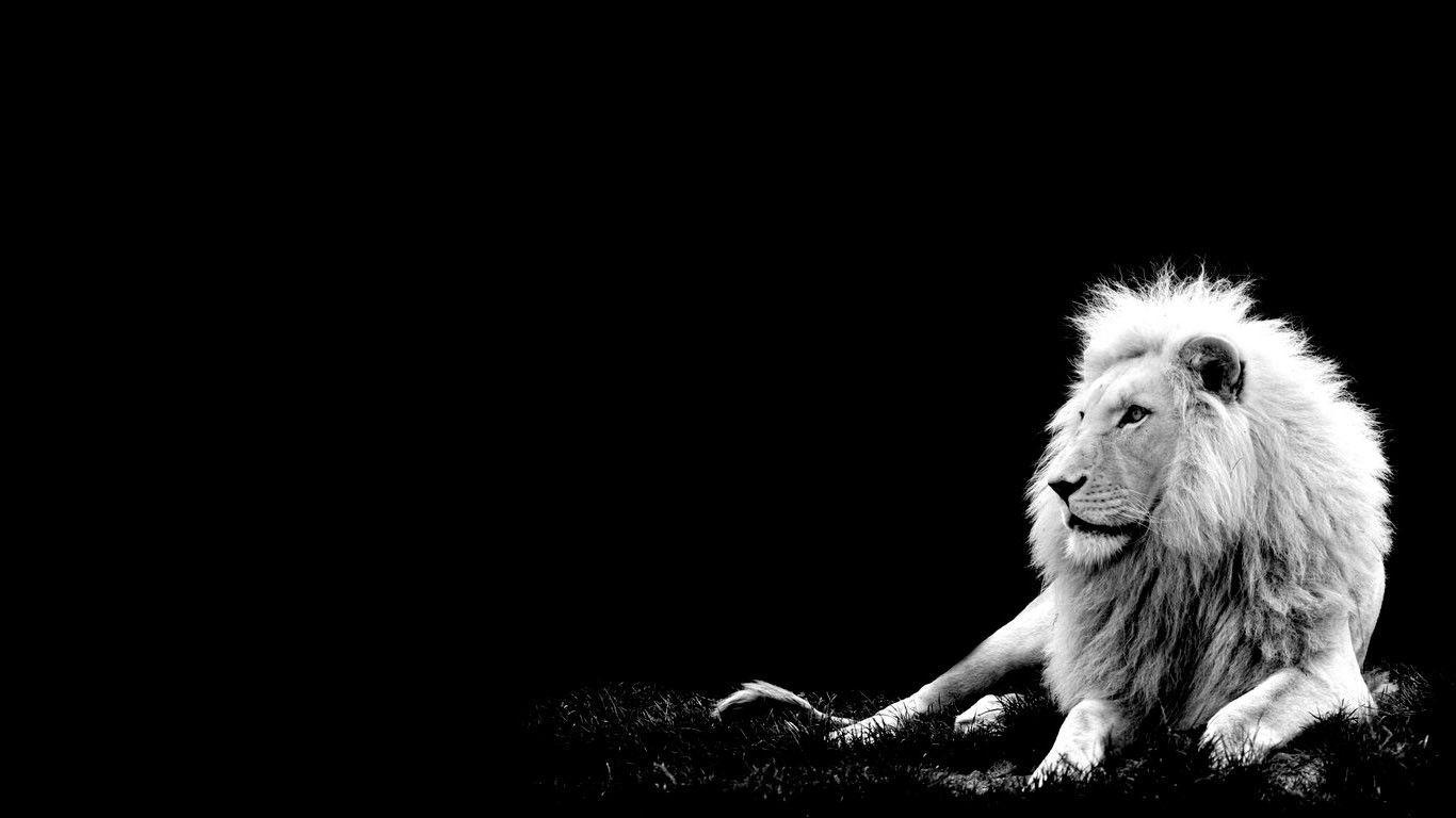 White Lion Backgrounds Wallpaper Cave
