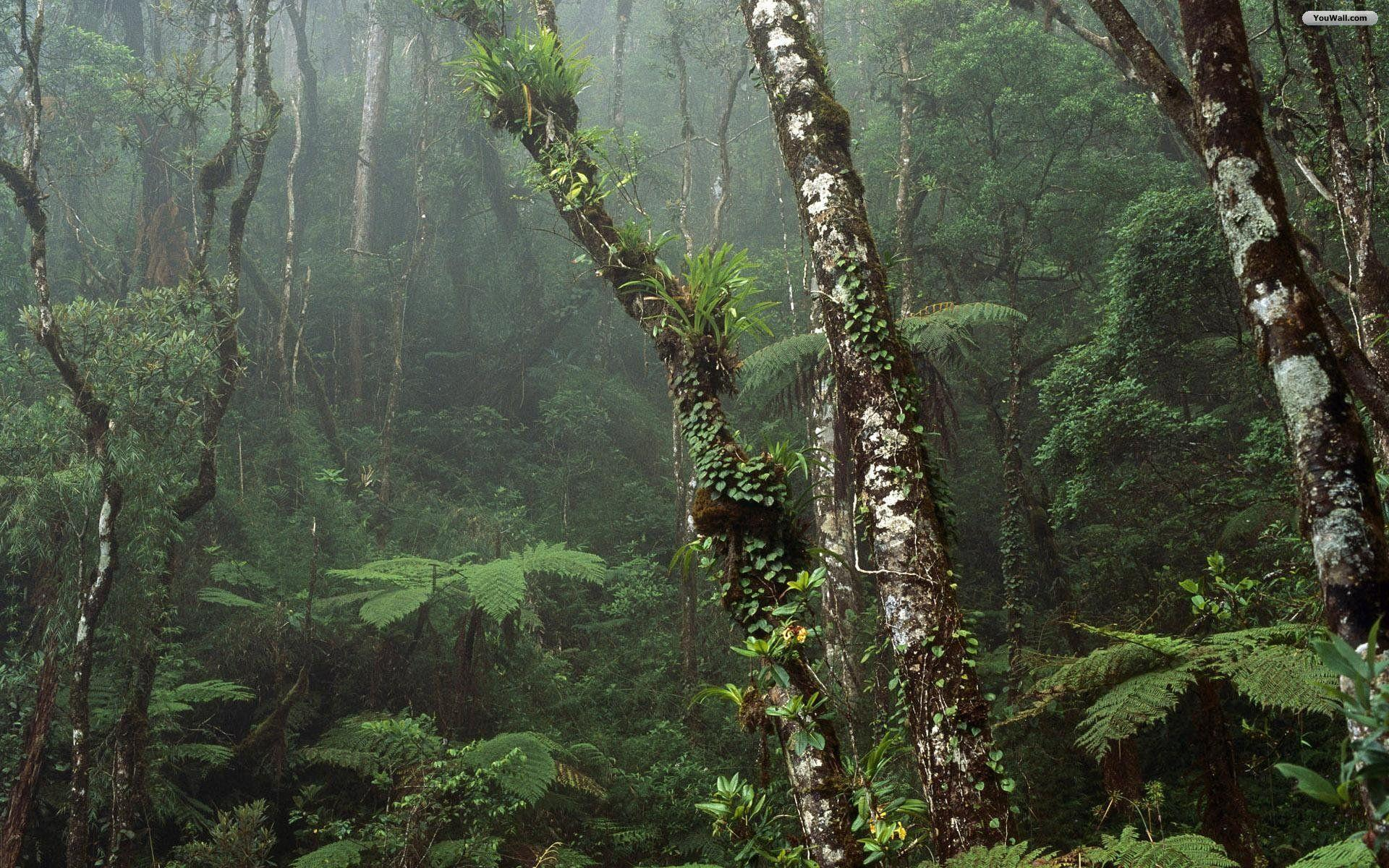 Wallpapers For > Amazon Rainforest Wallpapers Hd