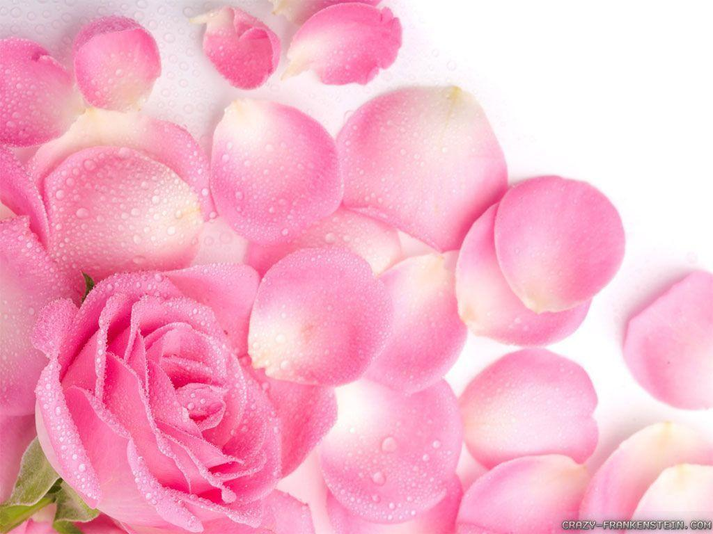 light pink flower wallpaper - photo #9