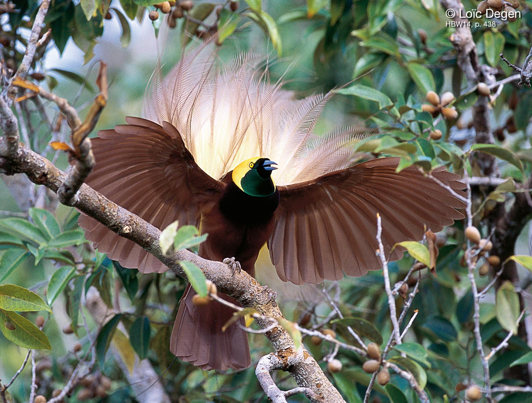 Birds Of Paradise Wallpaper Download Free Birds Of Paradise