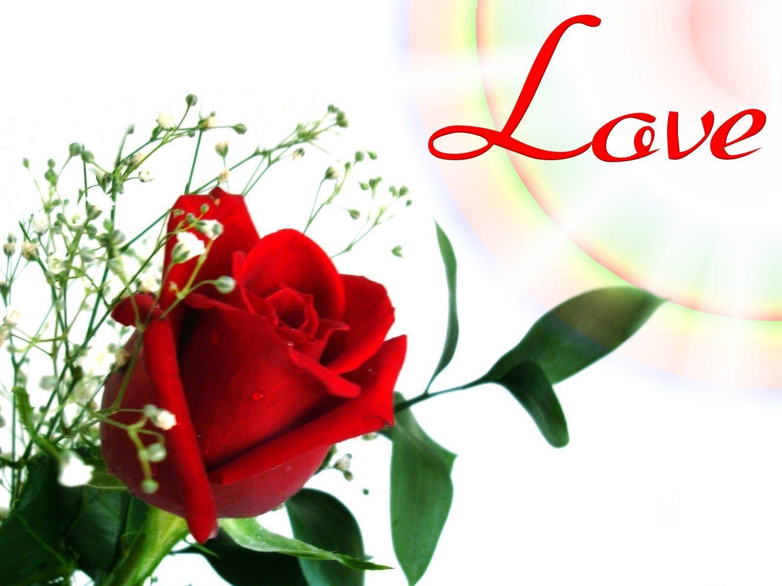 love flower wallpapers - wallpaper cave