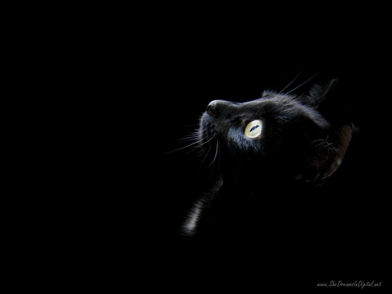 Wallpapers Black Cat Wallpaper Cave