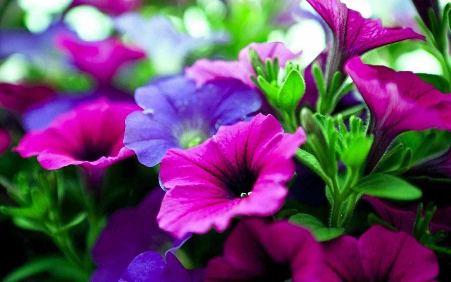 Download Free Flowers Photos: Nature Flower Wallpapers
