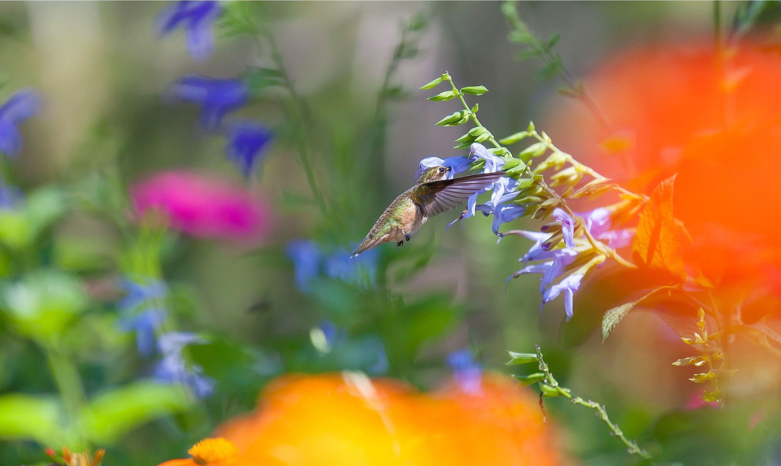 Nguyentuanblogppd: hummingbird redux 2. 2. 5. 9 twitter social follow.