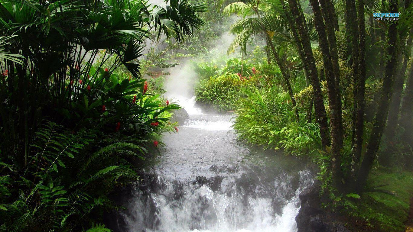 Waterfall in the jungle wallpapers