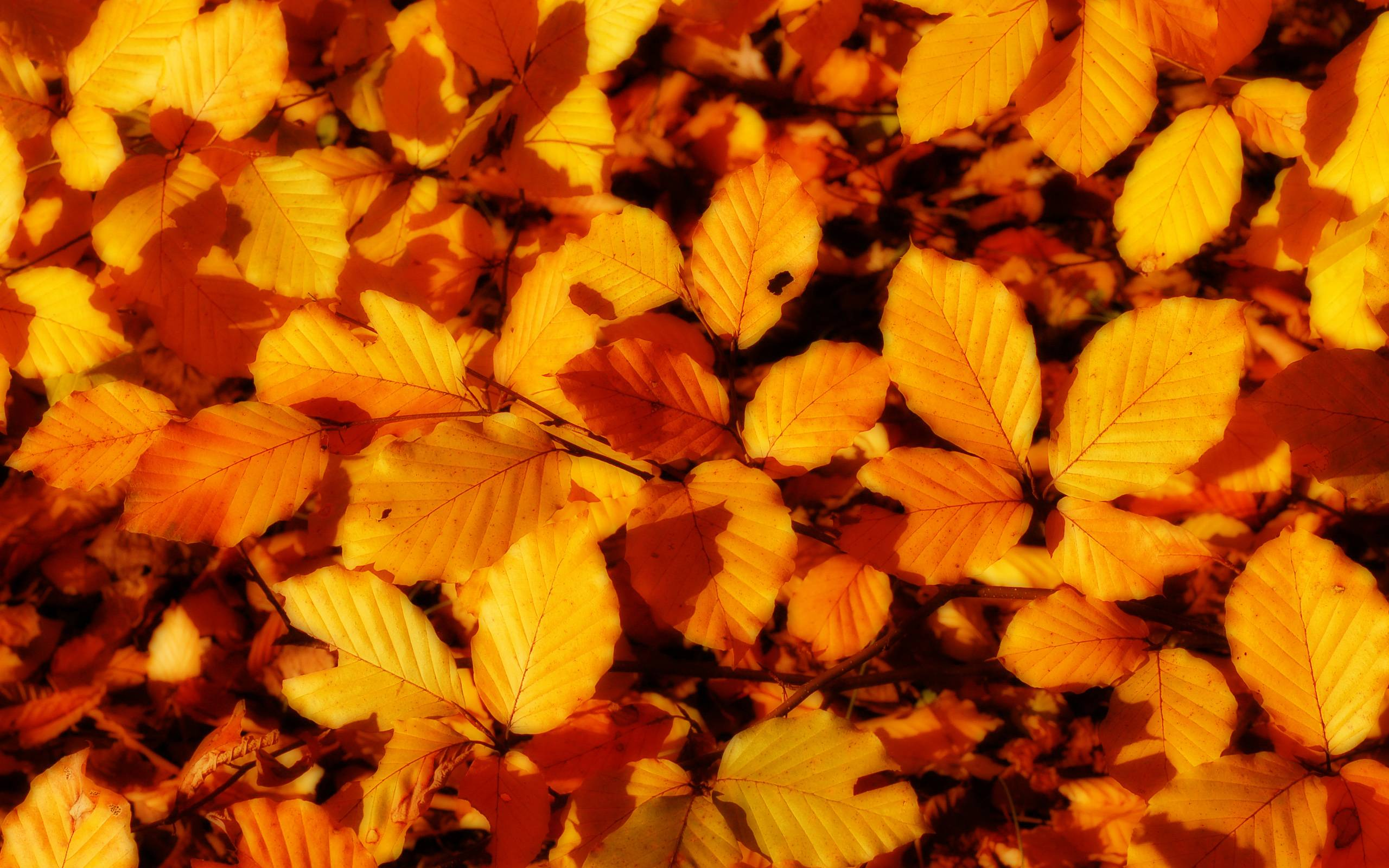 Autumn Leaves Pictures - Nature Wallpapers