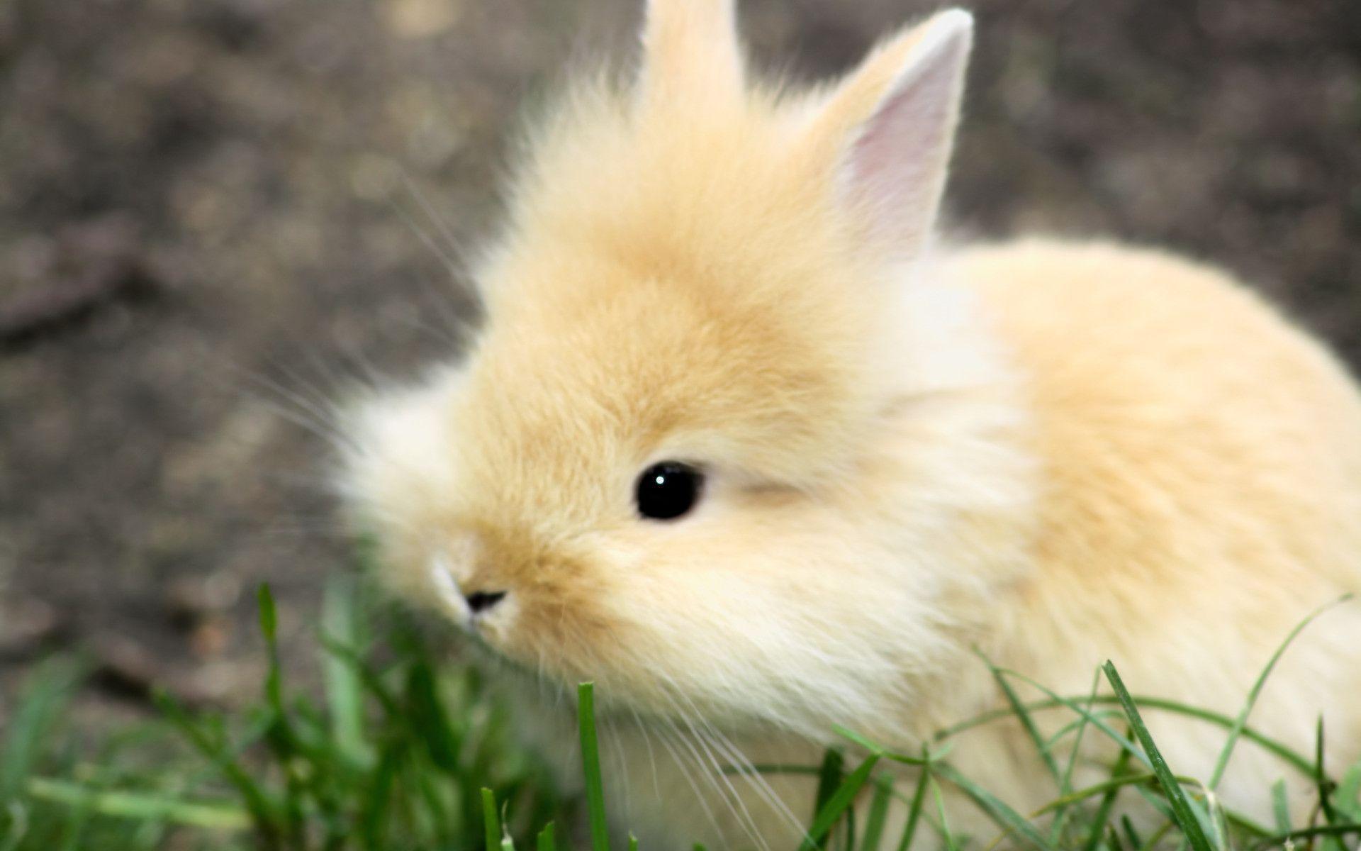baby rabbit wallpaper cute - photo #26