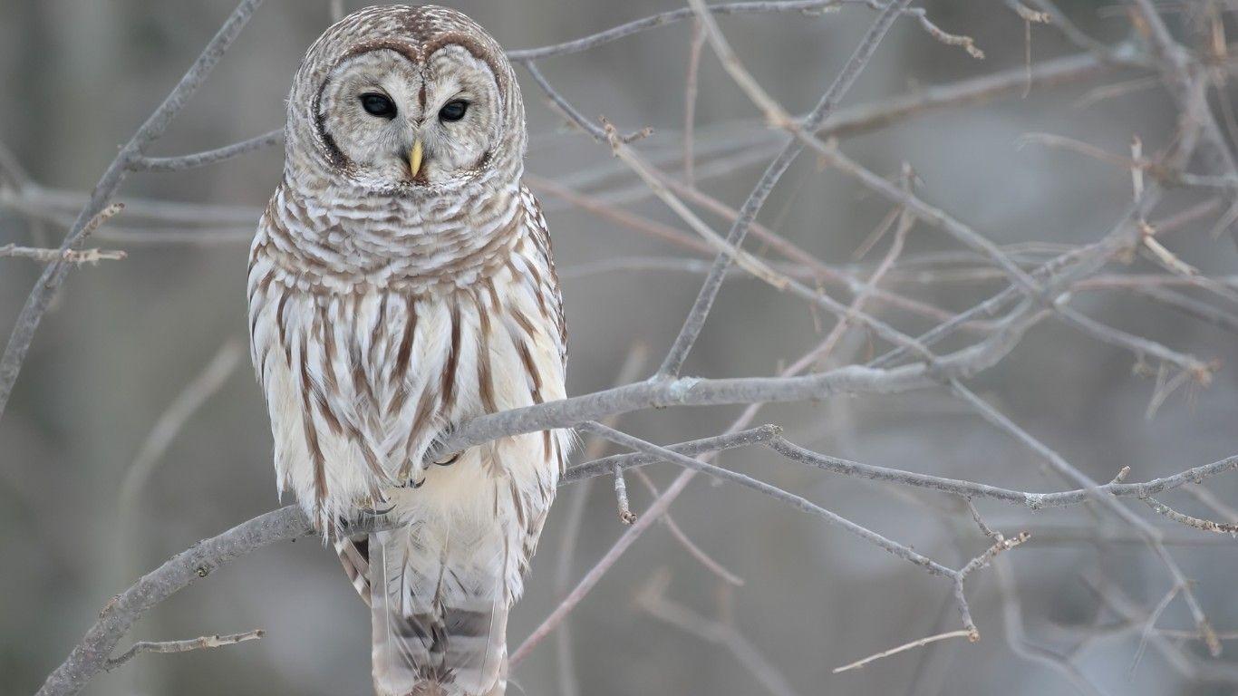 owl winter bird animal - photo #21