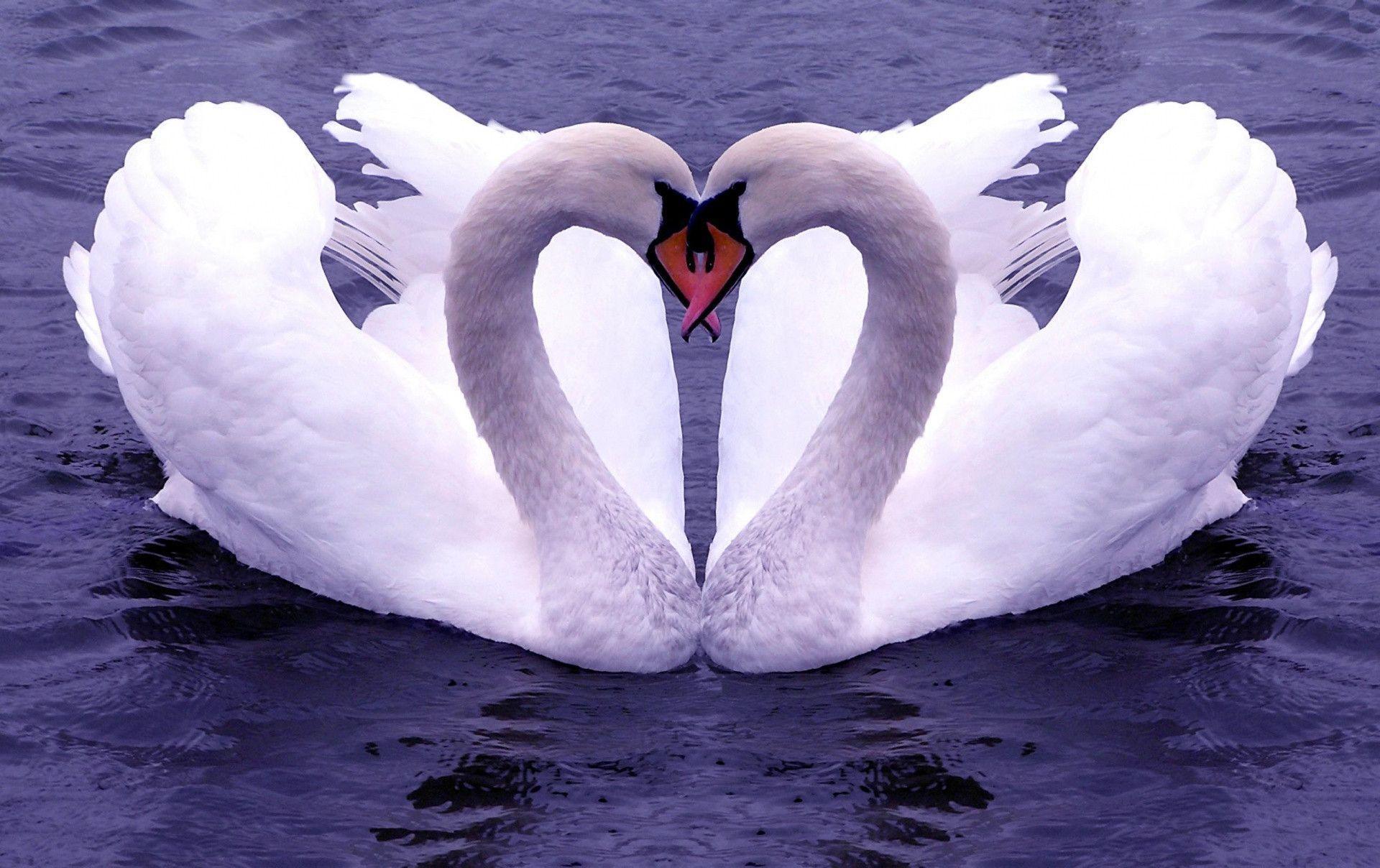 Love Birds Wallpaper | Love Bird Pictures Download | Cool Wallpapers