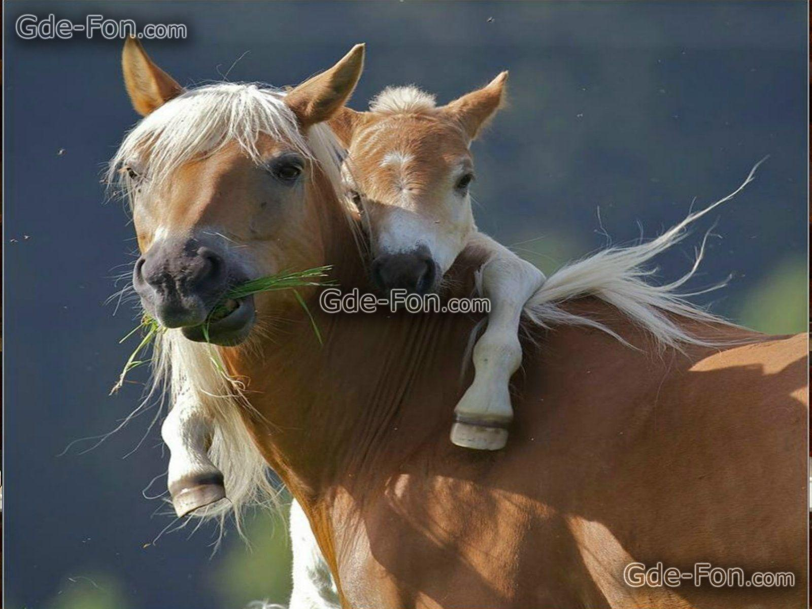 Horse desktop wallpapers free wallpaper cave - Free horse backgrounds ...