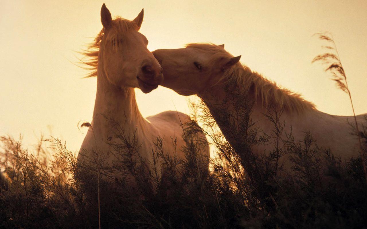 Free Desktop Wallpapers Horses Wallpaper Cave