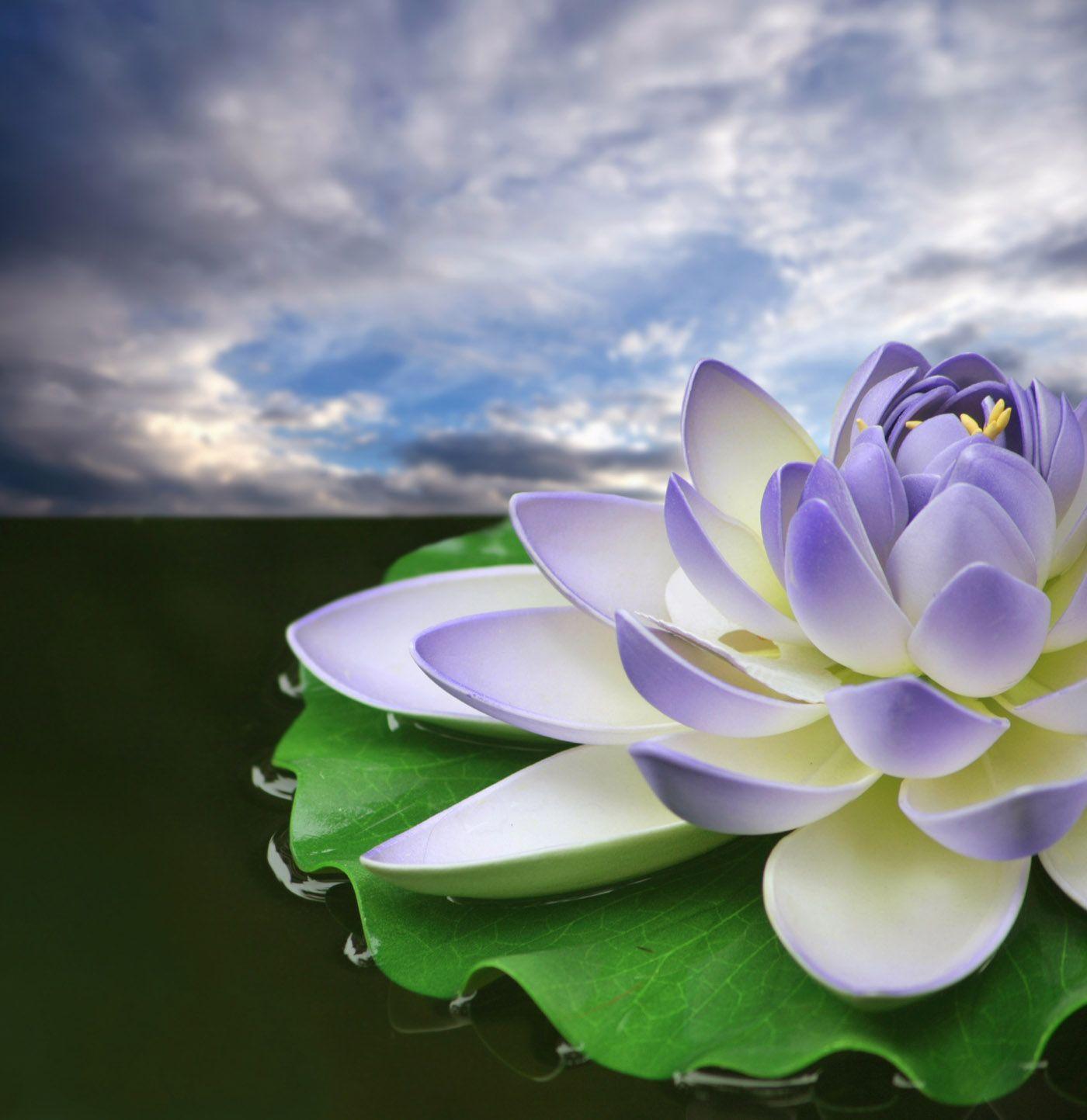 Lotus 31033 - Flower Wallpapers - Flowers