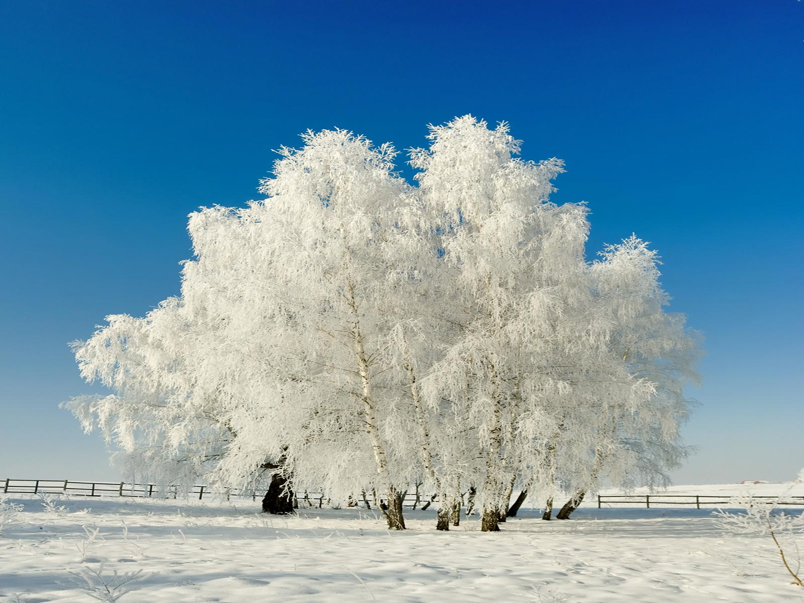 pin snow wallpapers trees - photo #26