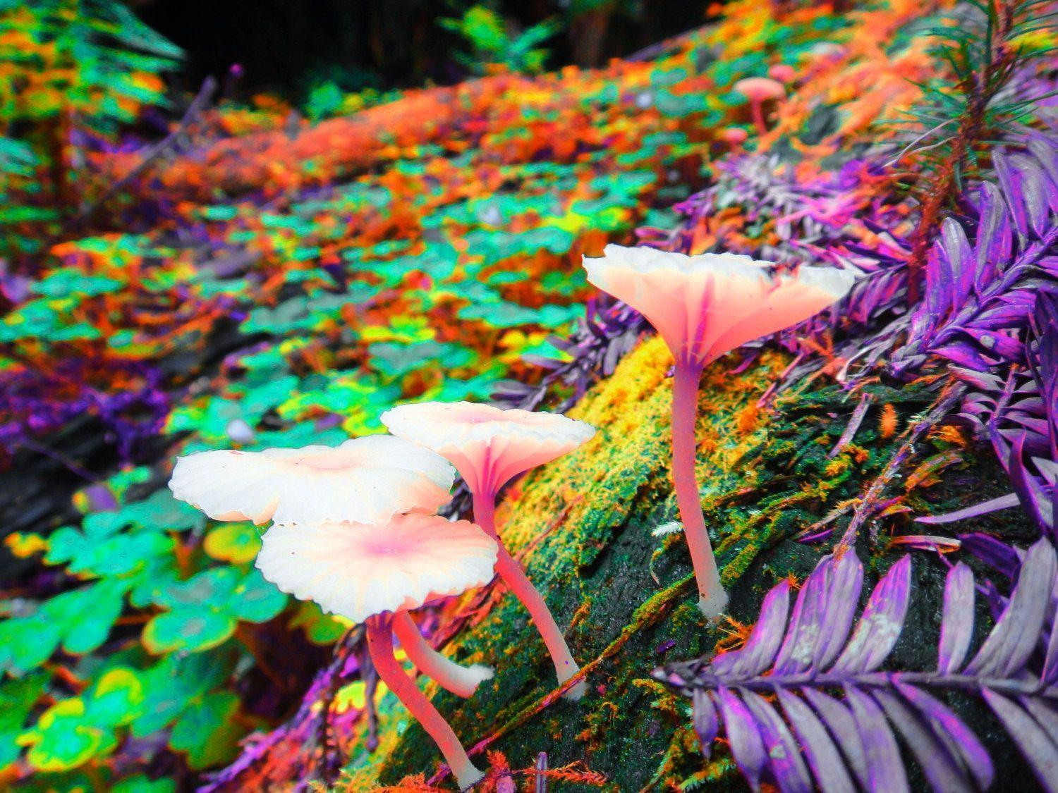 Trippy desktop wallpapers wallpaper cave - Trippy nature wallpaper ...