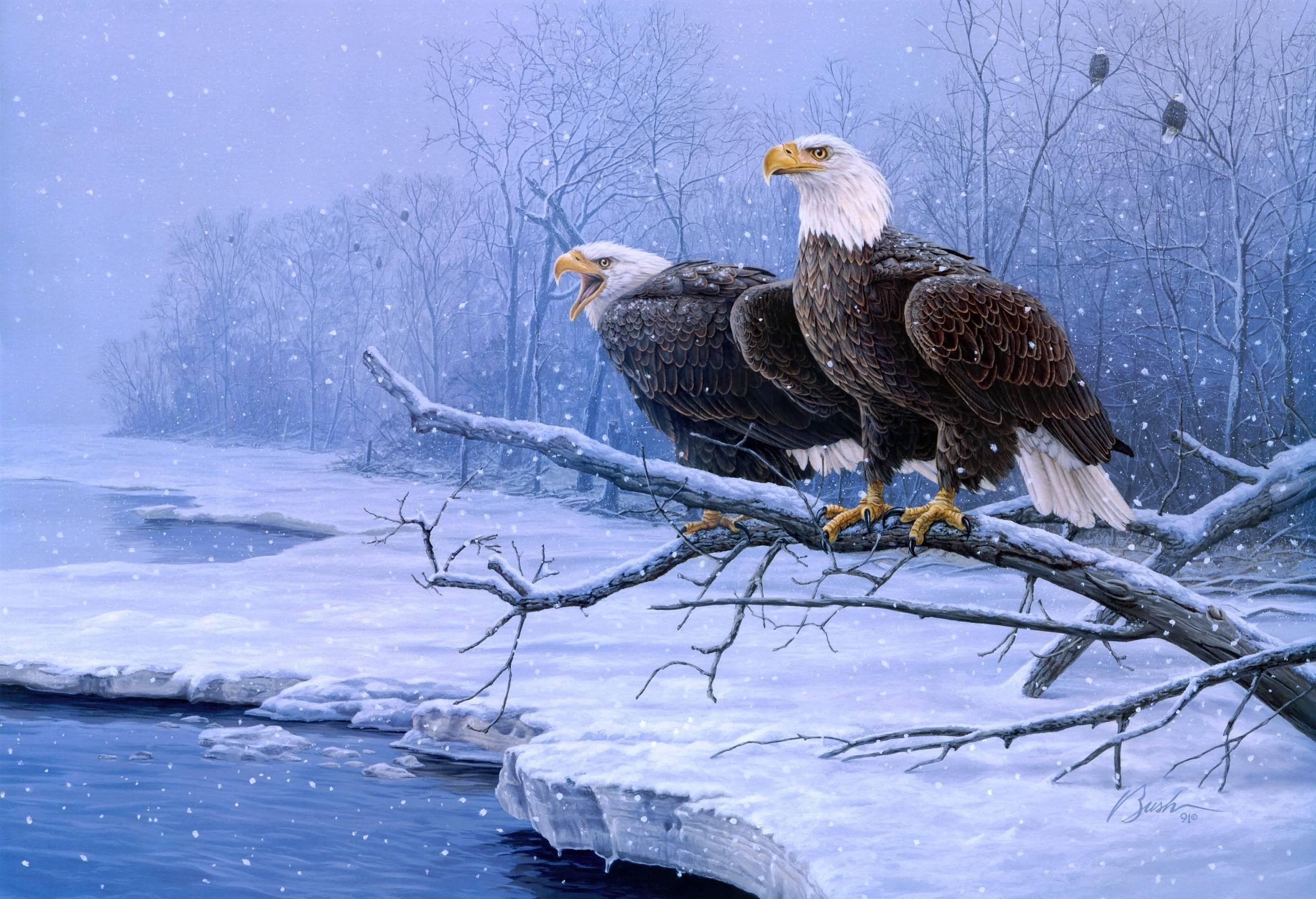 Bald Eagle Wallpapers - Wallpaper Cave