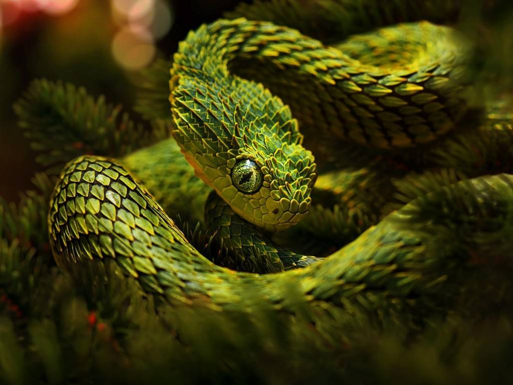the snake wallpapers - photo #12