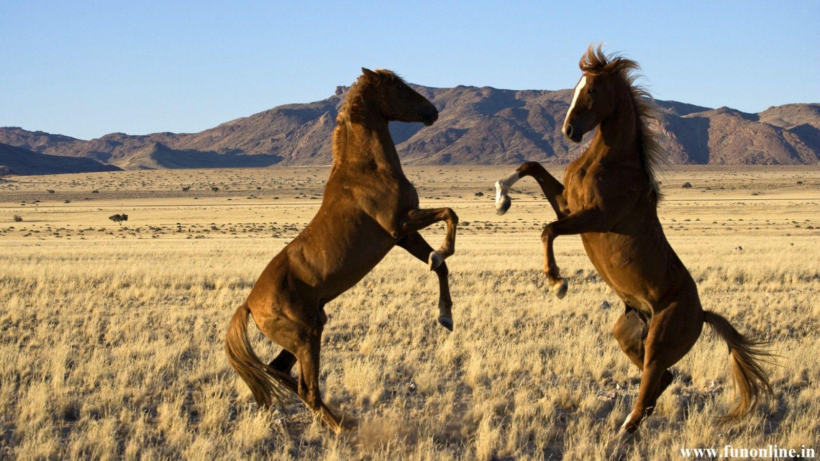 spring wild horse wallpaper - photo #1