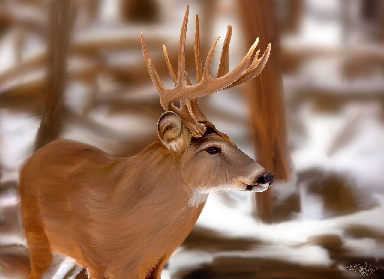 whitetail backgrounds wallpaper cave