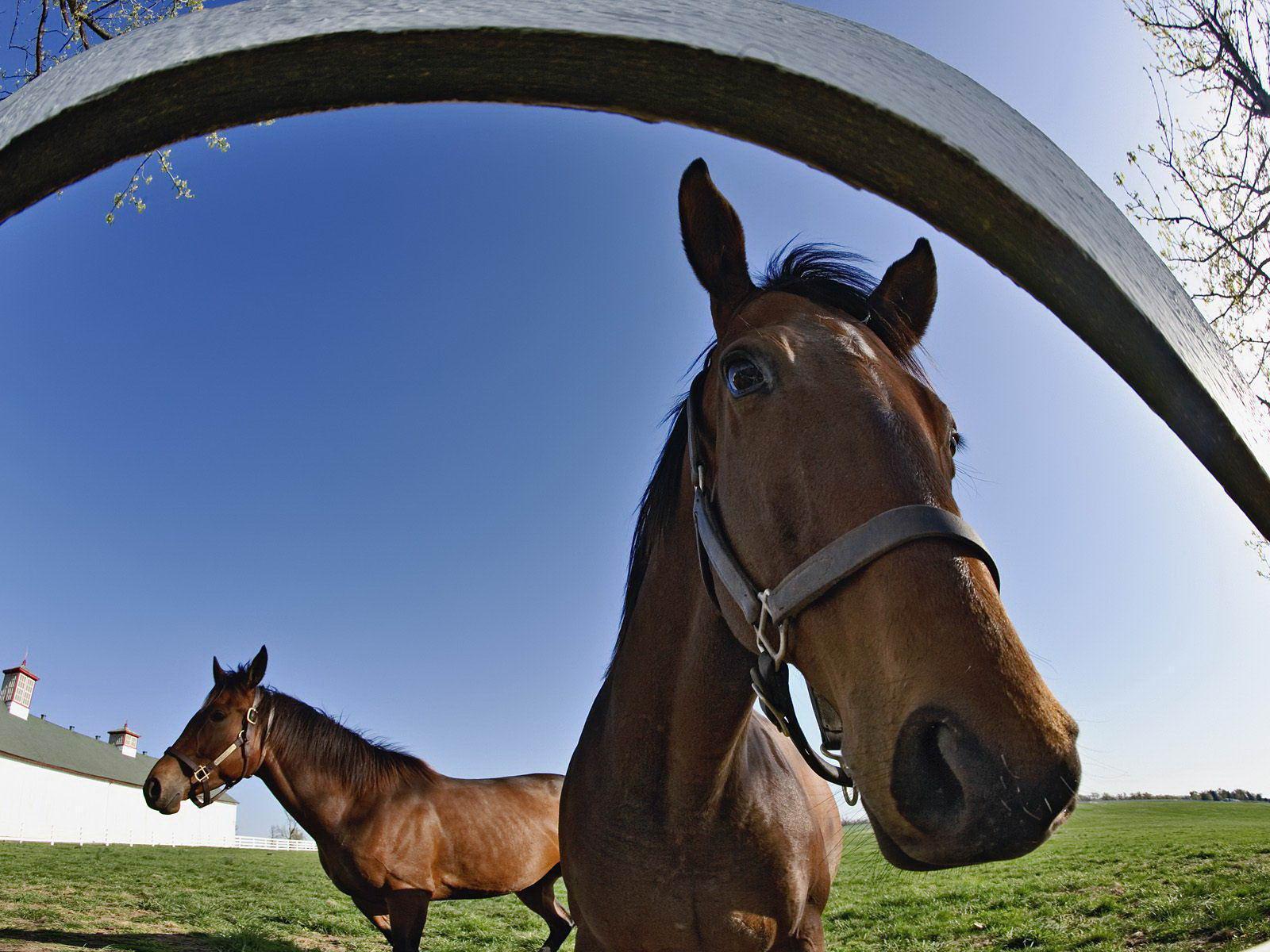 horse backgrounds image
