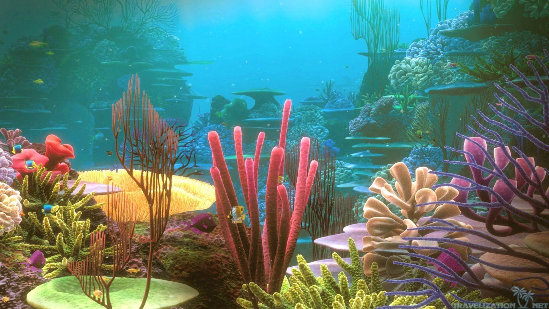 aquarium backgrounds coral - photo #9