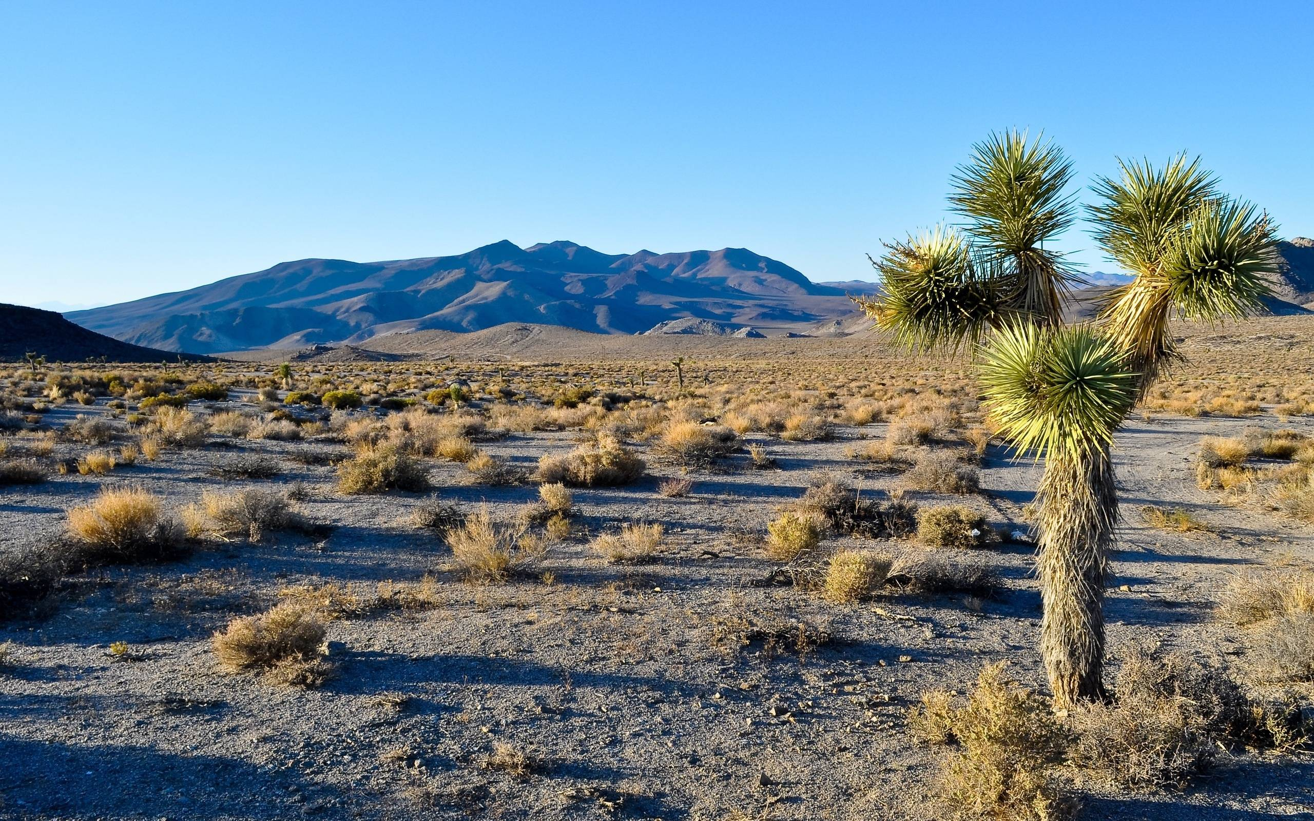 mojave desert scenery wallpaper - photo #27