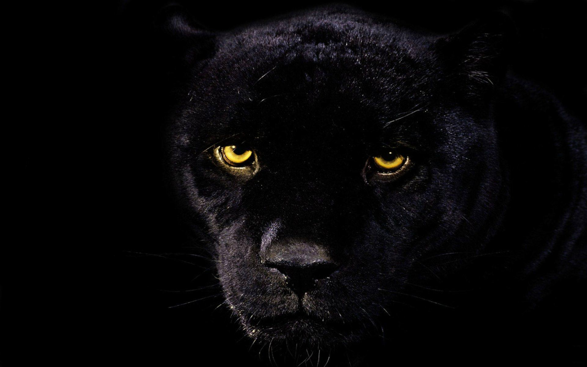 black leopard backgrounds - photo #3