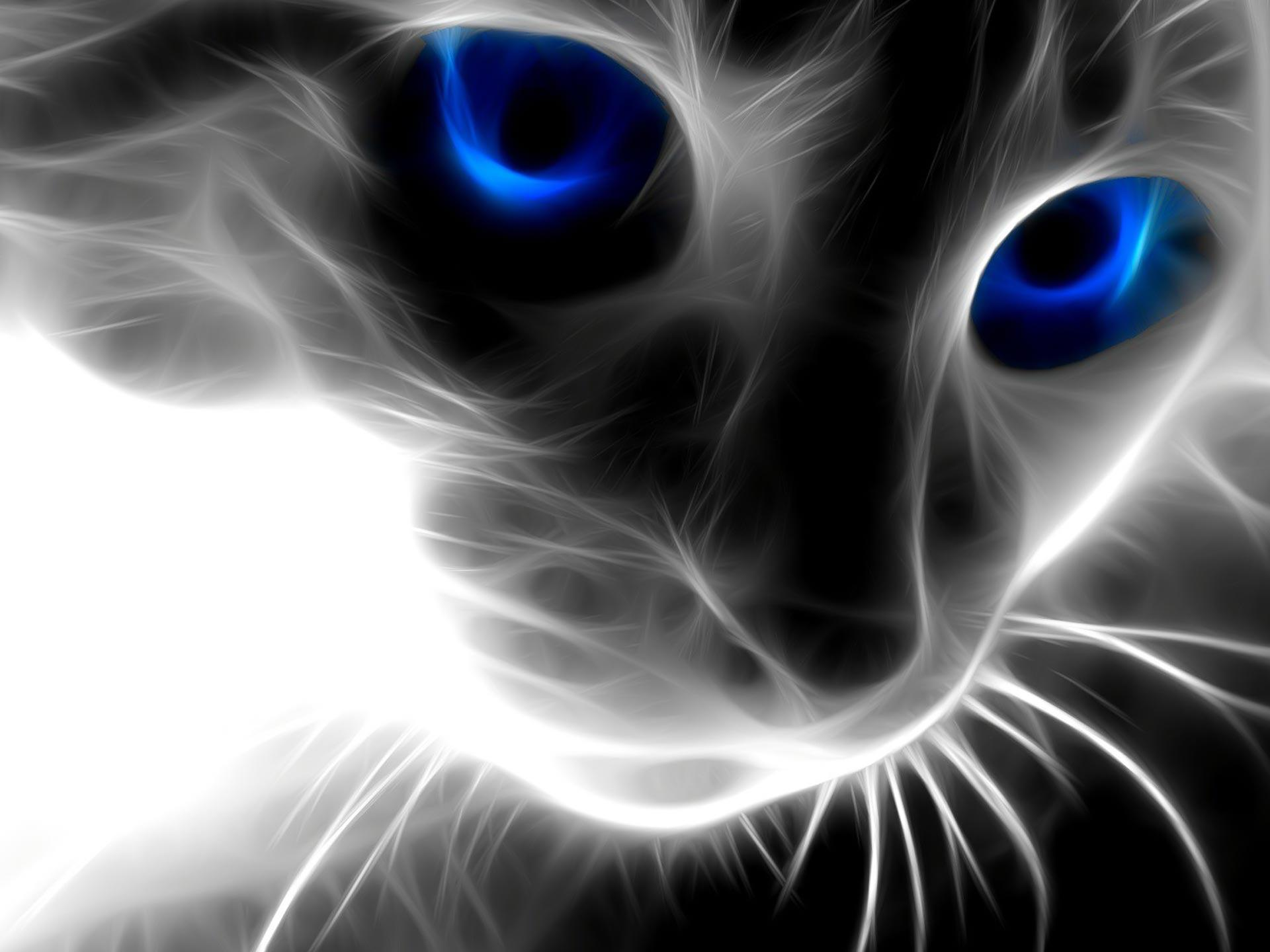 Desktop Wallpapers · Gallery · Windows 7 · Magic Cat wallpapers